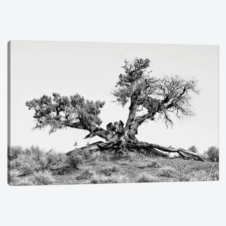 Black Arizona Series - Desert Tree Canvas Print #PHD1515} by Philippe Hugonnard Canvas Wall Art