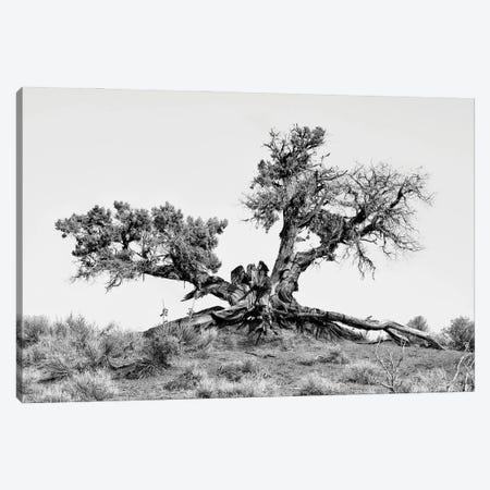 Black Arizona Series - Desert Tree Canvas Print #PHD1515} by Philippe Hugonnard Canvas Wall Art
