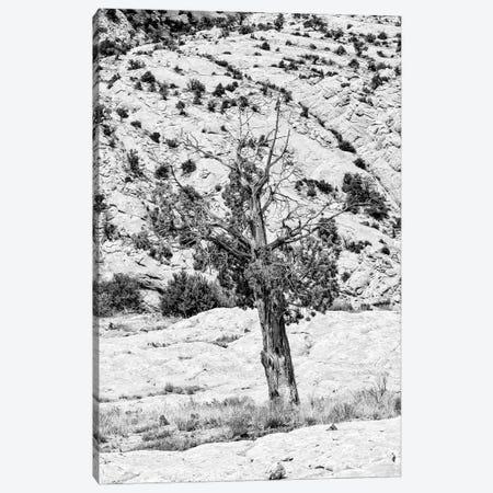 Black Arizona Series - Lonely Canvas Print #PHD1524} by Philippe Hugonnard Canvas Print