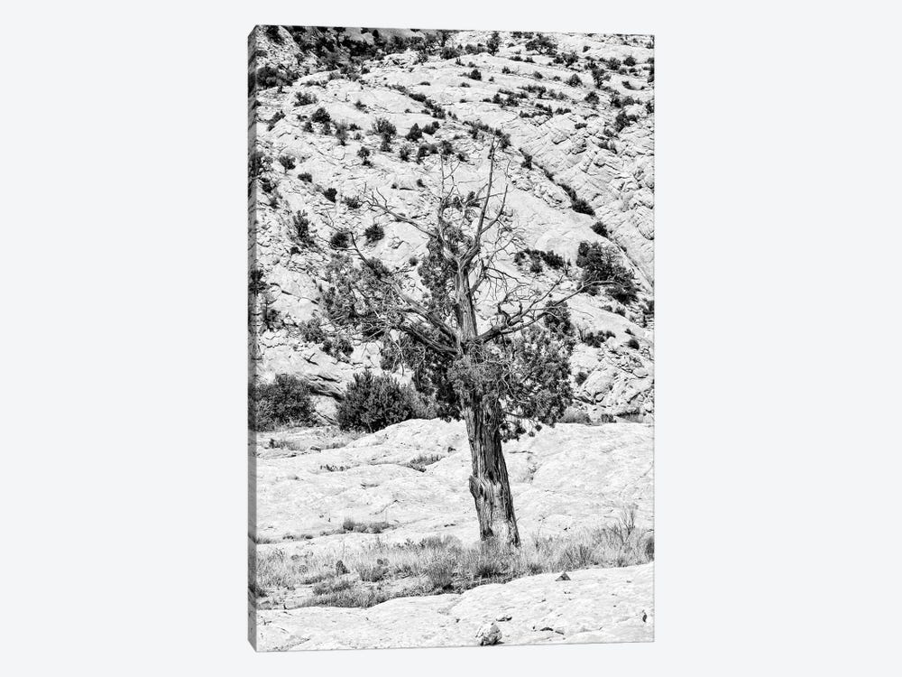 Black Arizona Series - Lonely by Philippe Hugonnard 1-piece Canvas Wall Art