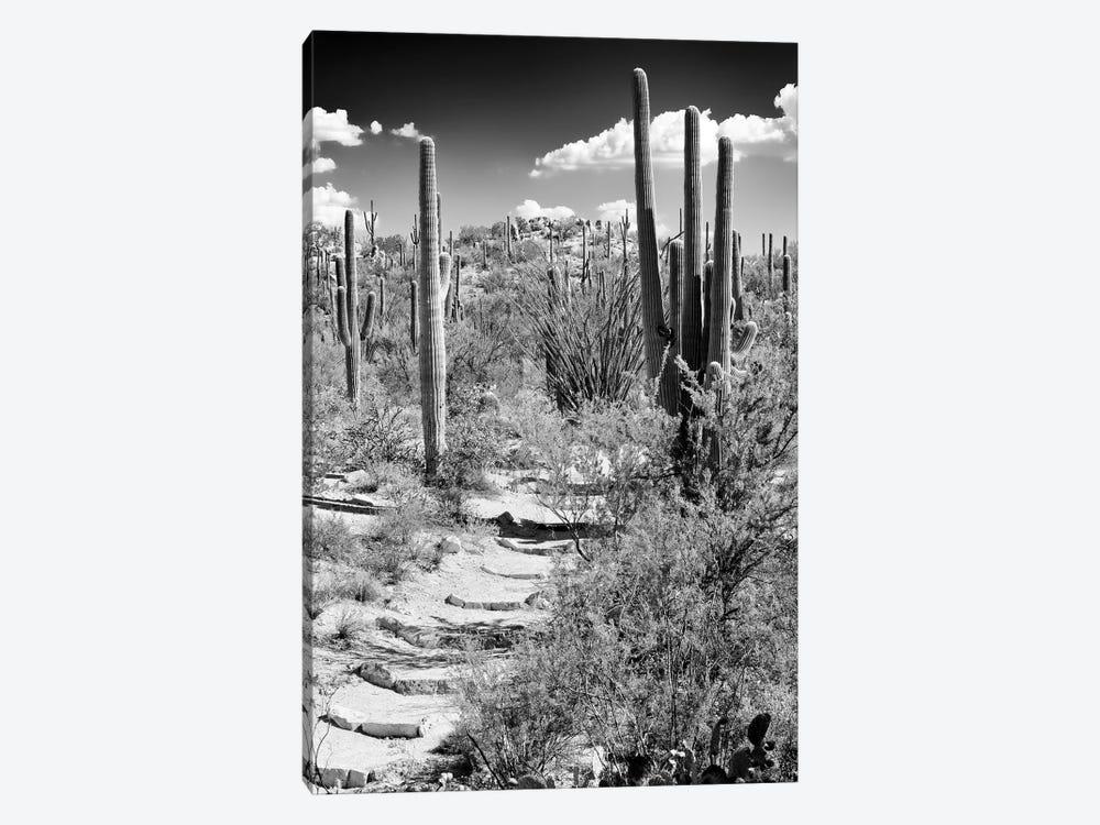 Black Arizona Series - Path through Cacti by Philippe Hugonnard 1-piece Canvas Print