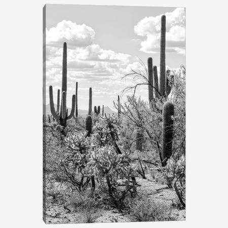 Black Arizona Series - Giant Cactus Canvas Print #PHD1532} by Philippe Hugonnard Canvas Print