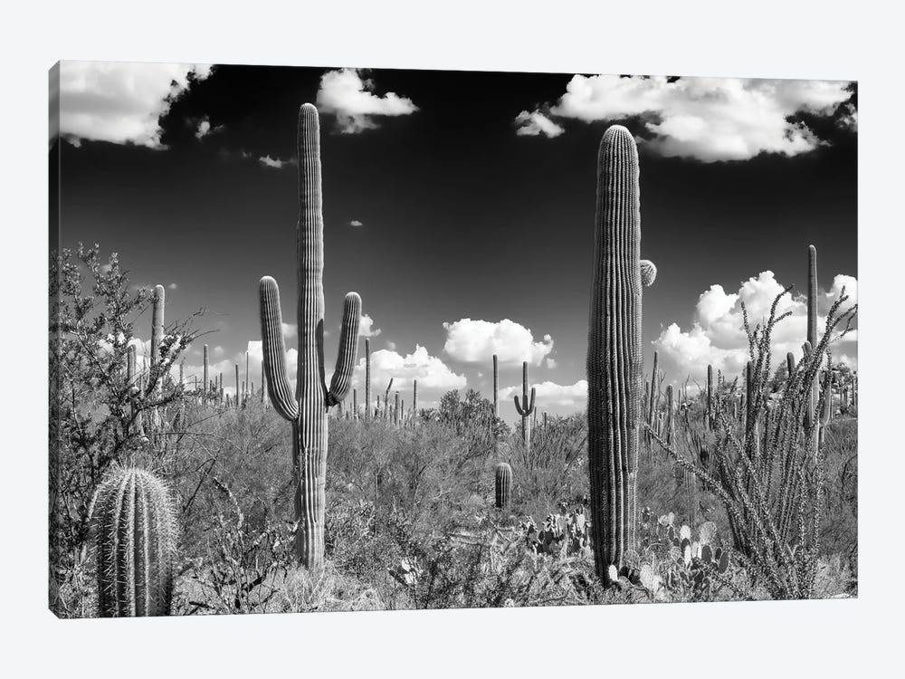 Black Arizona Series - Tucson Saguaro Cactus by Philippe Hugonnard 1-piece Canvas Art