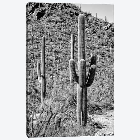 Black Arizona Series - The Cactus Hill Canvas Print #PHD1537} by Philippe Hugonnard Canvas Wall Art