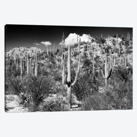 Black Arizona Series - Cactus Hill II Canvas Print #PHD1540} by Philippe Hugonnard Canvas Art