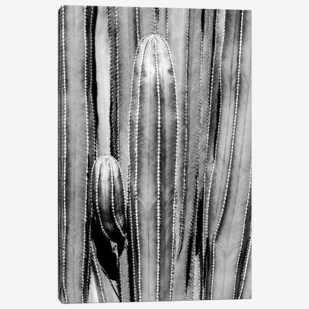 Black Arizona Series - Cactus Close Up Canvas Print #PHD1541} by Philippe Hugonnard Canvas Art