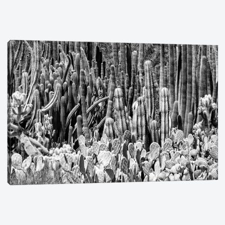 Black Arizona Series - Cactus Families Canvas Print #PHD1543} by Philippe Hugonnard Canvas Artwork