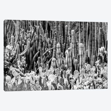 Black Arizona Series - Cactus Families Canvas Print #PHD1543} by Philippe Hugonnard Canvas Artwork