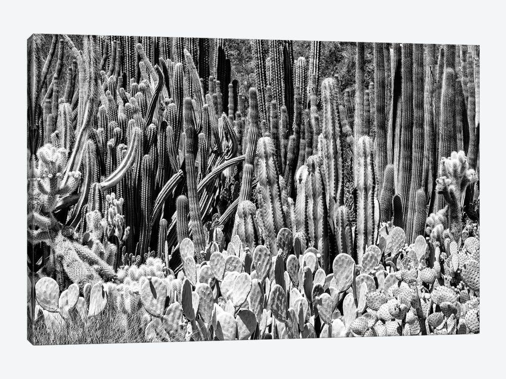 Black Arizona Series - Cactus Families by Philippe Hugonnard 1-piece Canvas Print