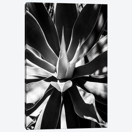 Black Arizona Series - Aloe Vera Heart Canvas Print #PHD1544} by Philippe Hugonnard Art Print