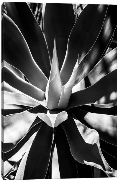 Black Arizona Series - Aloe Vera Heart Canvas Art Print