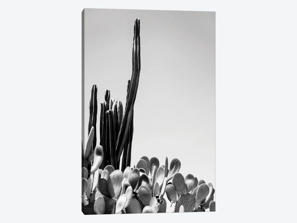Black Arizona Series - Cacti by Philippe Hugonnard 1-piece Art Print