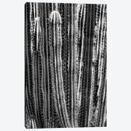 Black Arizona Series - Cactus Cacti Canvas Print #PHD1552} by Philippe Hugonnard Canvas Art Print