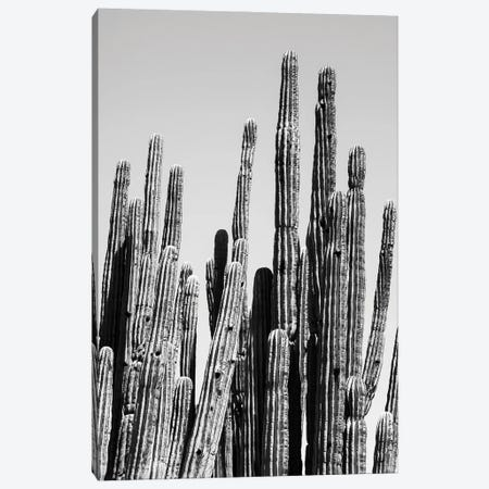 Black Arizona Series - Cactus Family Canvas Print #PHD1554} by Philippe Hugonnard Canvas Art