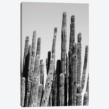 Black Arizona Series - Cactus Family Canvas Print #PHD1554} by Philippe Hugonnard Canvas Art