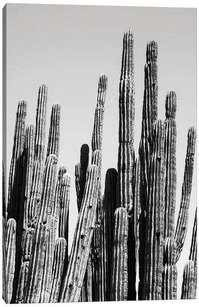 Black Arizona Series - Cactus Family Canvas Art Print