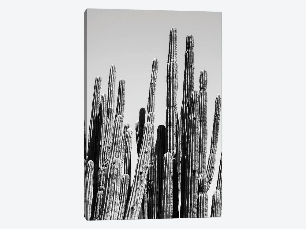 Black Arizona Series - Cactus Family by Philippe Hugonnard 1-piece Art Print