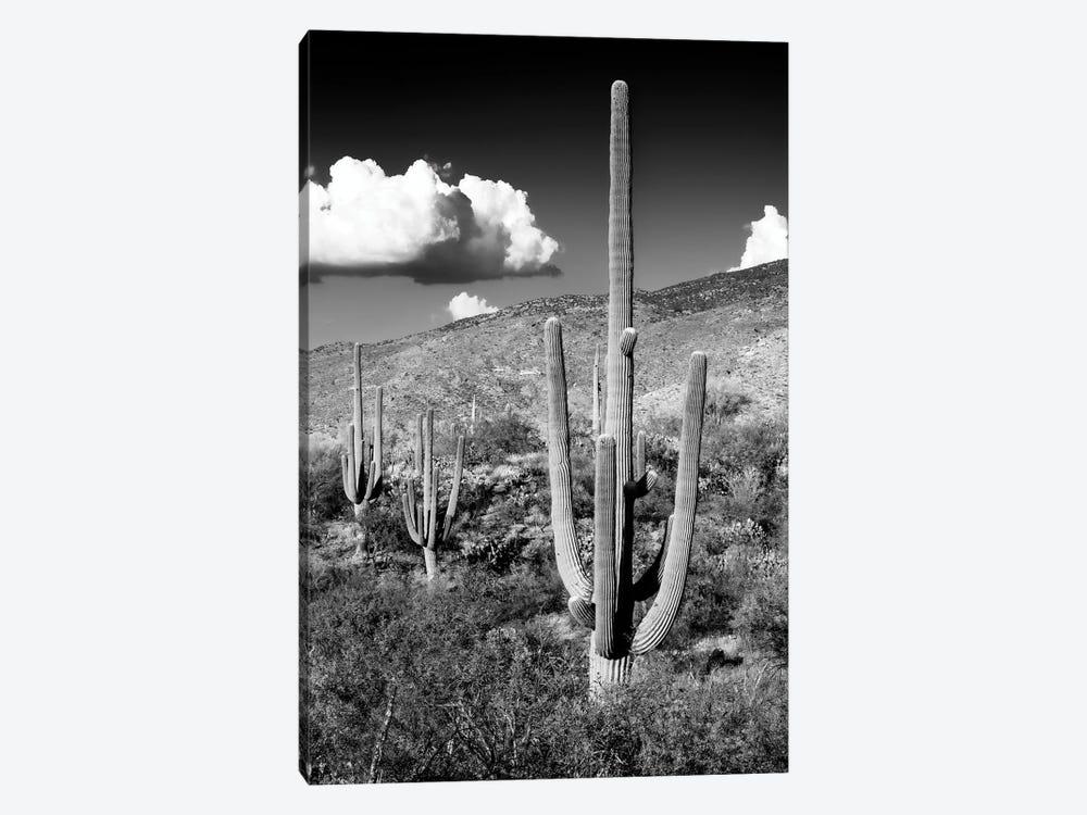 Black Arizona Series - Saguaro Cactus Valley by Philippe Hugonnard 1-piece Art Print