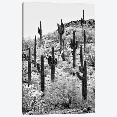 Black Arizona Series - The Cactus Hill II Canvas Print #PHD1559} by Philippe Hugonnard Canvas Art Print