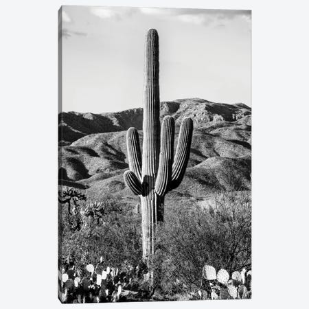 Black Arizona Series - Giant Cactus II Canvas Print #PHD1562} by Philippe Hugonnard Canvas Art