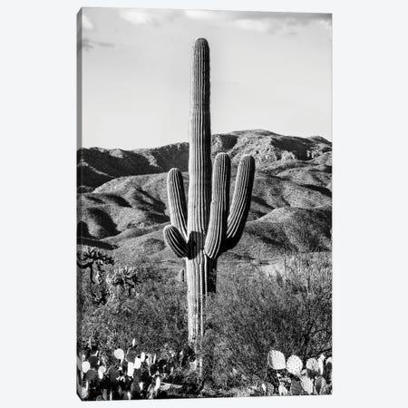 Black Arizona Series - Giant Cactus II Canvas Print #PHD1562} by Philippe Hugonnard Canvas Art