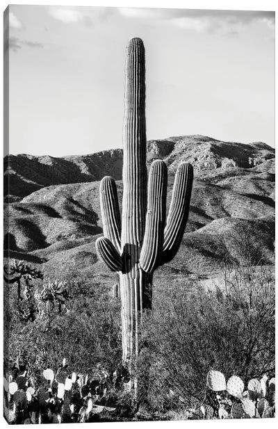 Black Arizona Series - Giant Cactus II Canvas Art Print