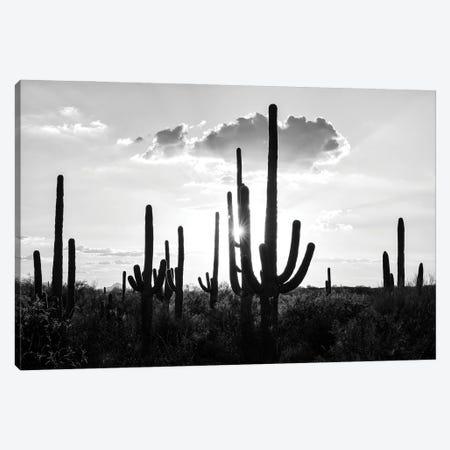 Black Arizona Series - Silhouettes of Cactus Canvas Print #PHD1569} by Philippe Hugonnard Canvas Art
