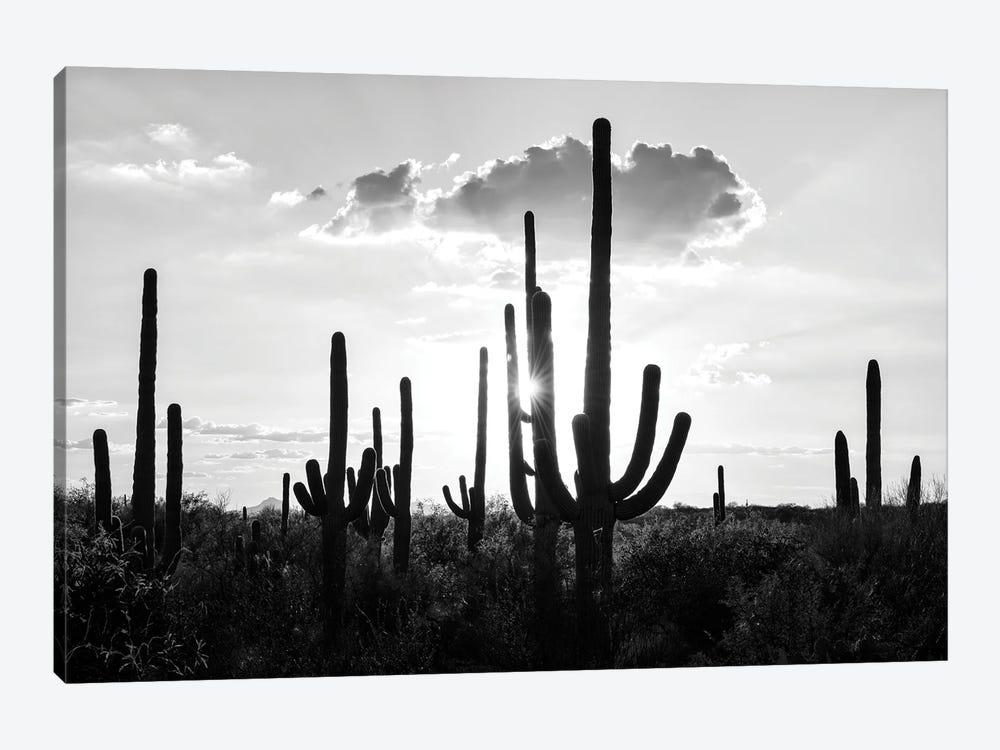 Black Arizona Series - Silhouettes of Cactus by Philippe Hugonnard 1-piece Art Print