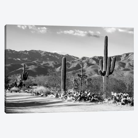 Black Arizona Series - Sentinel Of The Southwest Canvas Print #PHD1571} by Philippe Hugonnard Art Print
