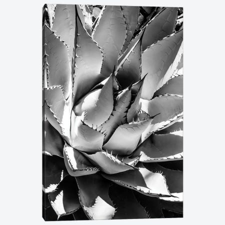 Black Arizona Series - Agave Canvas Print #PHD1573} by Philippe Hugonnard Canvas Art Print