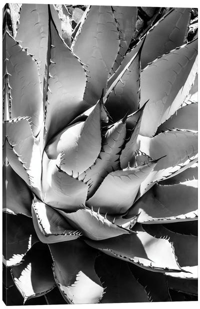 Black Arizona Series - Agave Canvas Art Print