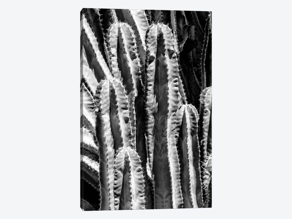 Black Arizona Series - Saguaro Cactus Close Up by Philippe Hugonnard 1-piece Art Print