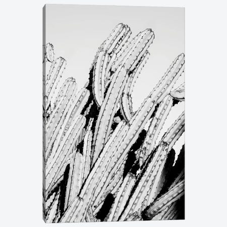 Black Arizona Series - Cactus Movement Canvas Print #PHD1598} by Philippe Hugonnard Canvas Print