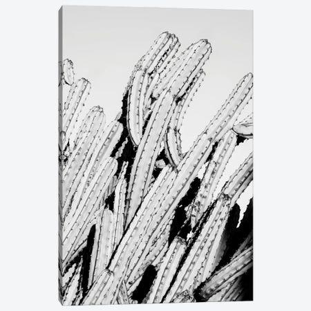 Black Arizona Series - Cactus Movement Canvas Print #PHD1598} by Philippe Hugonnard Canvas Print