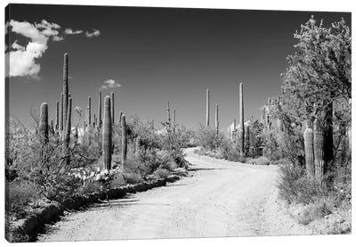 Black Arizona Series - Along The Path Canvas Art Print