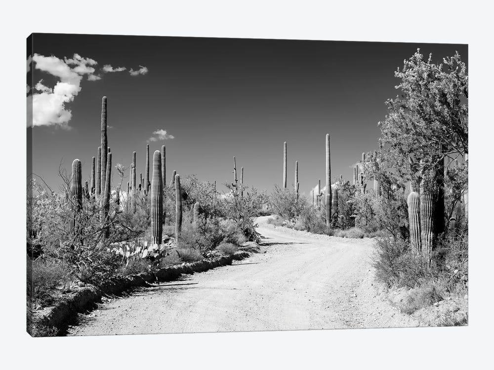 Black Arizona Series - Along The Path by Philippe Hugonnard 1-piece Canvas Artwork
