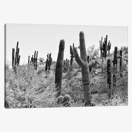 Black Arizona Series - Cacti Hill Canvas Print #PHD1605} by Philippe Hugonnard Canvas Artwork