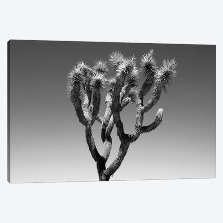 Black Arizona Series - The Joshua Tree Canvas Print #PHD1612} by Philippe Hugonnard Canvas Artwork
