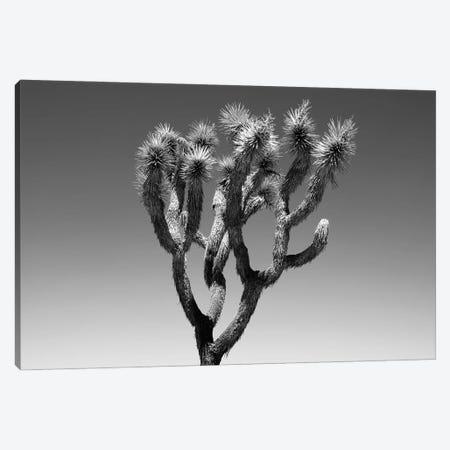Black Arizona Series - The Joshua Tree Canvas Print #PHD1612} by Philippe Hugonnard Canvas Artwork