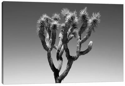 Black Arizona Series - The Joshua Tree Canvas Art Print