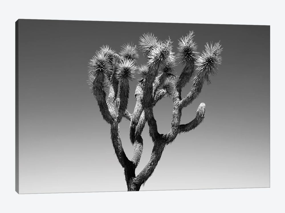 Black Arizona Series - The Joshua Tree by Philippe Hugonnard 1-piece Canvas Print
