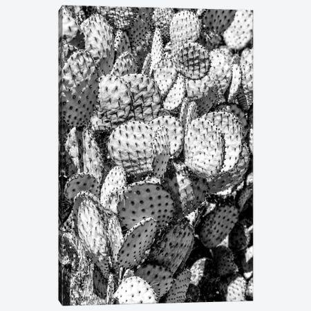 Black Arizona Series - Prickly Pear Cactus Family Canvas Print #PHD1613} by Philippe Hugonnard Canvas Wall Art