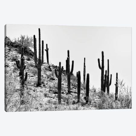 Black Arizona Series - Saguaro Cactus Hill III Canvas Print #PHD1625} by Philippe Hugonnard Canvas Wall Art