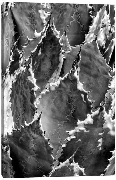 Black Arizona Series - Agave III Canvas Art Print