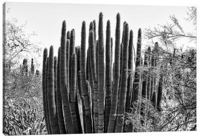 Black Arizona Series - Big Cactus Canvas Art Print