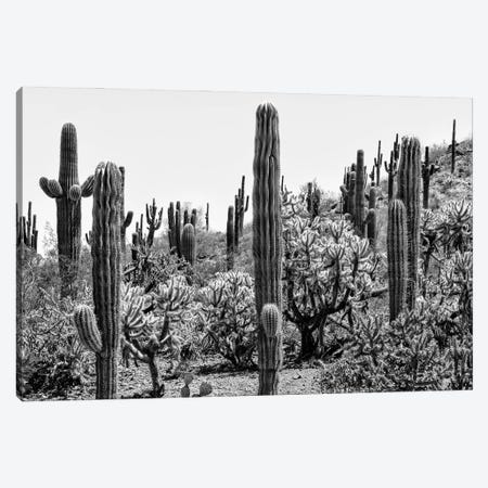 Black Arizona Series - Amazing Cactus Canvas Print #PHD1642} by Philippe Hugonnard Art Print