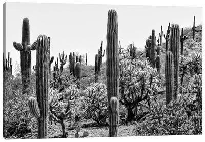 Black Arizona Series - Amazing Cactus Canvas Art Print