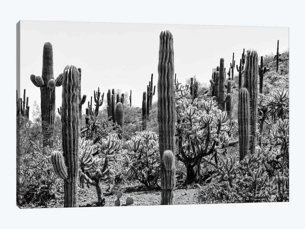 Black Arizona Series - Amazing Cactus by Philippe Hugonnard 1-piece Canvas Wall Art