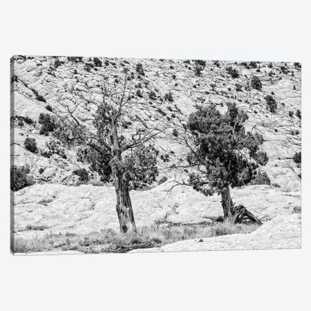 Black Arizona Series - Two Trees Canvas Print #PHD1643} by Philippe Hugonnard Canvas Art Print