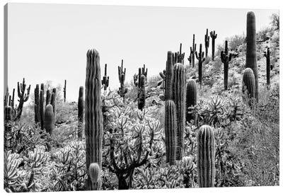 Black Arizona Series - Amazing Cactus II Canvas Art Print